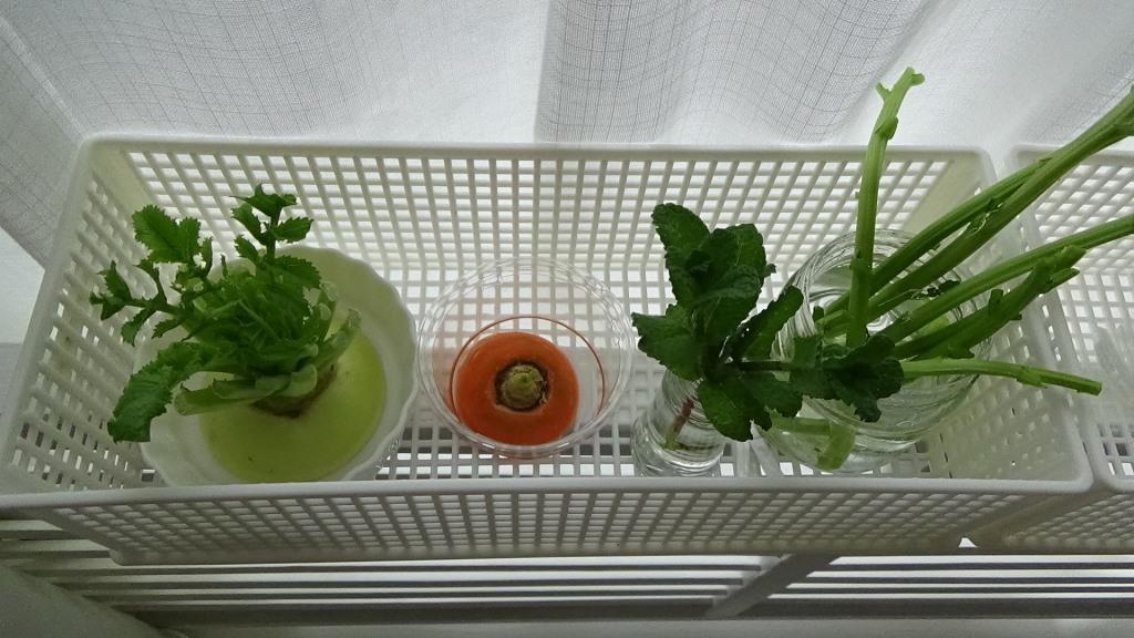ちょっとだけ欲しいハーブ&リボベジ栽培・窓辺の小さなキッチンガーデン