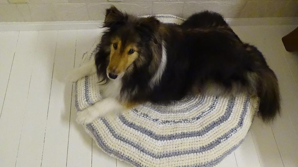裂き編みの犬用ベッドカバーが完成したけれど・・・
